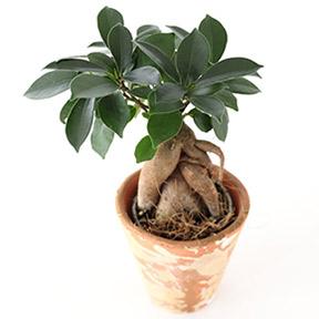 Kogel Pflanzenmarkt Terrakottawelt Buro Und Zimmerpflanzen